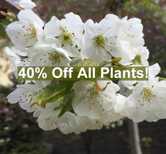 Crews Hill Special Offers - Plants, Shrubs and Trees on offer